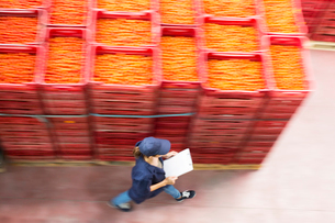 Worker with clipboard walking past tomato crates in food processing plantの写真素材 [FYI02162117]