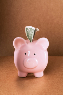Dollar sticking out of piggy bank on counterの写真素材 [FYI02162680]