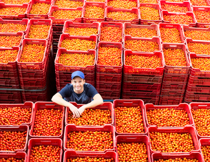 Portrait of worker standing among tomato cratesの写真素材 [FYI02163251]