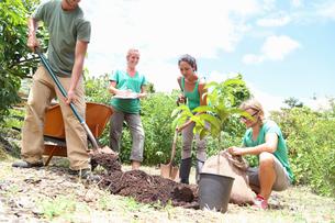 Four people planting tree in community gardenの写真素材 [FYI02163909]