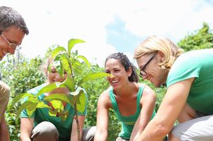 Smiling people planting tree in sunny gardenの写真素材 [FYI02164230]