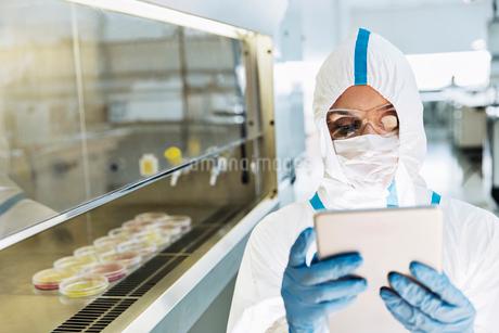 Scientist in clean suit using digital tablet in laboratoryの写真素材 [FYI02164868]