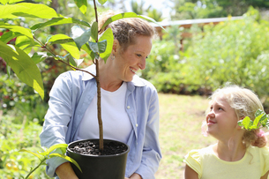 Woman and girl with tree seedling in sunny gardenの写真素材 [FYI02165247]
