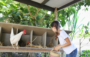 Girl with basket searching for eggs in chicken coopの写真素材 [FYI02165306]