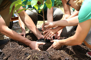 People planting tree seedling togetherの写真素材 [FYI02166486]