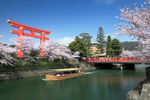 桜咲く平安神宮の鳥居と十石舟めぐりの写真素材 [FYI02166878]