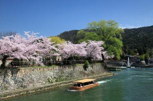 桜咲く岡崎疎水と十石舟めぐりの写真素材 [FYI02166889]