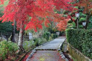 紅葉と後龜山天皇 嵯峨小倉陵への道の写真素材 [FYI02166939]