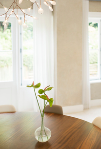 Anthurium bouquet on table in dining roomの写真素材 [FYI02168083]