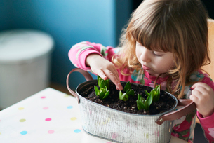 Curious girl touching sprouting flowers in flowerpotの写真素材 [FYI02168181]