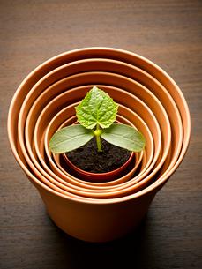 Plant sprouting in nesting flowerpotの写真素材 [FYI02168797]