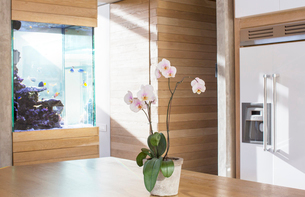 Pink orchids on kitchen tableの写真素材 [FYI02168979]