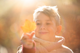 Close up smiling boy holding golden autumn leafの写真素材 [FYI02169201]