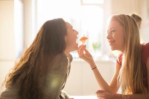 Teenage girl feeding friend sushi with chopsticksの写真素材 [FYI02169439]