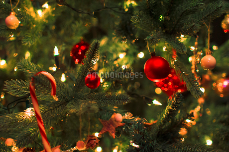 Close up ornaments and string lights on Christmas treeの写真素材 [FYI02170228]