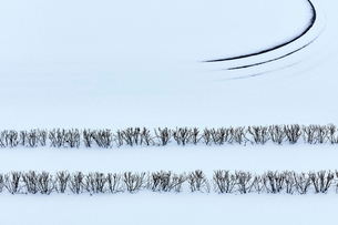 Winter branches in snow covered landscapeの写真素材 [FYI02171174]