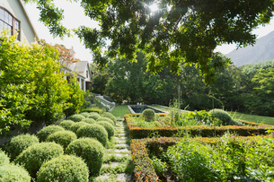 Sunny lush green garden outside luxury homeの写真素材 [FYI02172703]
