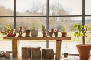 Cacti and potted plants growing in sunroom windowの写真素材 [FYI02173317]