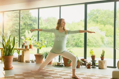 Pregnant woman practicing yoga warrior 2 poseの写真素材 [FYI02173409]