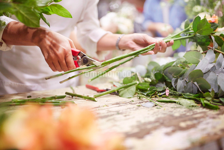 Florist trimming flower stems at flower shopの写真素材 [FYI02173498]