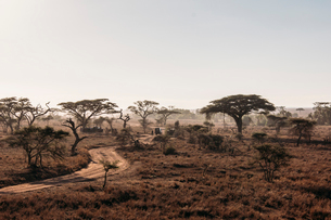 Trees and dirt road in tranquil sunny desert, Serengeti, Tanzaniaの写真素材 [FYI02173632]