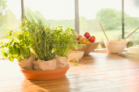 Fresh potted herbs on dining tableの写真素材 [FYI02173666]