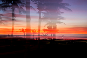 Silhouetted palm trees and dramatic sunset over ocean, Broome, Australiaの写真素材 [FYI02173862]