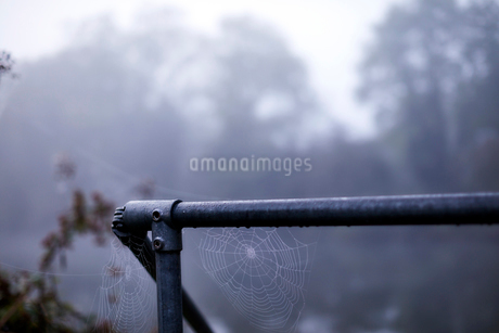 Spider webs hanging from wet railingの写真素材 [FYI02174433]