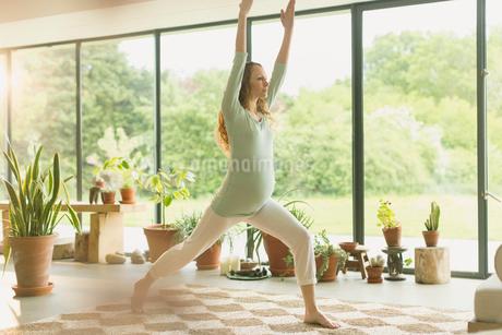 Pregnant woman practicing yoga warrior 1 poseの写真素材 [FYI02174850]