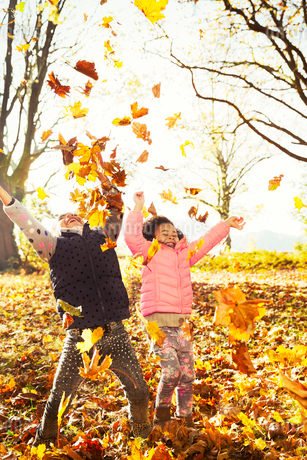 Playful sisters throwing autumn leaves in sunny woodsの写真素材 [FYI02175399]