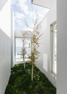 Trees in sunny luxury home showcase interior courtyardの写真素材 [FYI02175788]