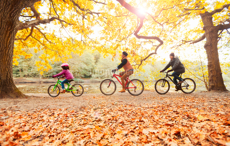 Young family bike riding in autumn parkの写真素材 [FYI02176064]