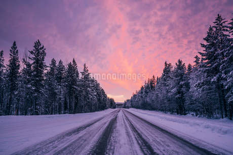Remote winter road through snow covered forest trees against dramatic purple and pink sky, Lapland,の写真素材 [FYI02177318]