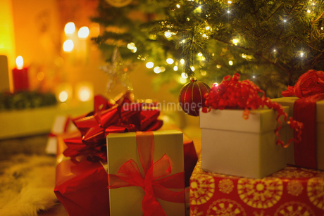 Christmas gifts with red bows under illuminated Christmas treeの写真素材 [FYI02177588]