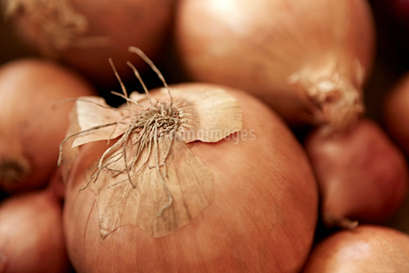 Still life close up full frame fresh, organic, healthy, rustic onion with skin and rootsの写真素材 [FYI02178559]