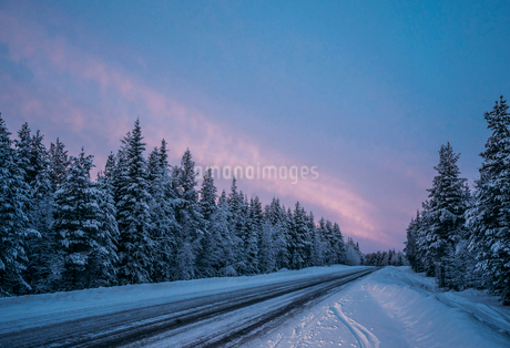 Remote winter road through snow covered forest trees, Lapland, Finlandの写真素材 [FYI02179528]