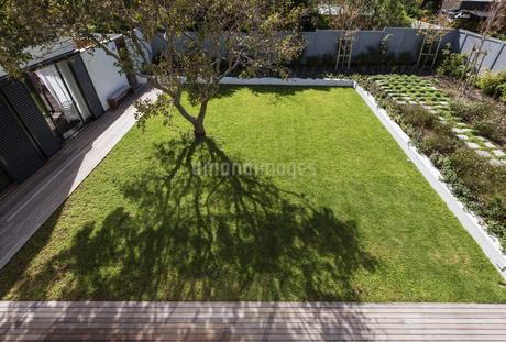 Tree casting shadow in sunny luxury yardの写真素材 [FYI02179799]