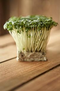 Still life close up fresh, organic, healthy green kaiware daikon sprouts bunchの写真素材 [FYI02180476]