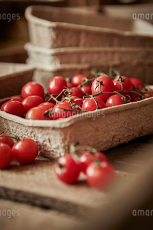 Still life fresh, organic, red, healthy vine cherry tomatoes in containerの写真素材 [FYI02180806]