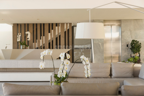 Modern, luxury home showcase interior living room with orchidsの写真素材 [FYI02181181]