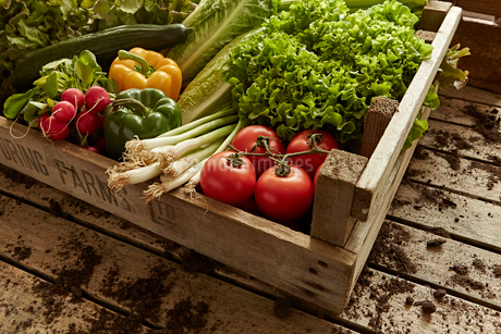 Still life fresh, organic, healthy vegetable harvest variety in wood crateの写真素材 [FYI02182063]