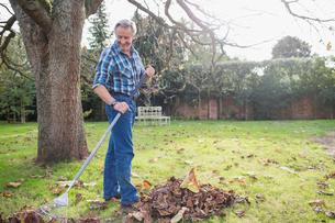 Senior man raking autumn leaves in backyardの写真素材 [FYI02183033]