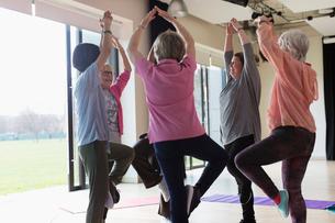 Active senior women exercising, practicing yoga tree poseの写真素材 [FYI02185961]