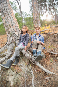 Children sitting on tree roots in forestの写真素材 [FYI02186288]