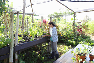 Woman gardening in greenhouseの写真素材 [FYI02186884]