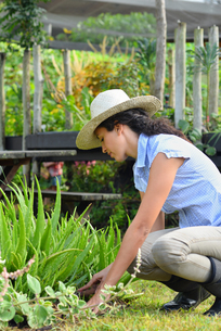 Woman wearing straw hat and rubber boots gardening in gardenの写真素材 [FYI02186912]