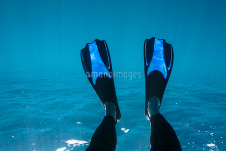 Personal perspective woman with flippers snorkeling underwaterの写真素材 [FYI02187091]