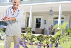 Senior woman watering plants in gardenの写真素材 [FYI02187275]