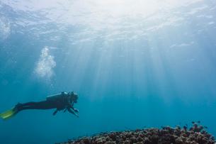 Woman scuba diving underwater, Maldives, Indian Oceanの写真素材 [FYI02187280]
