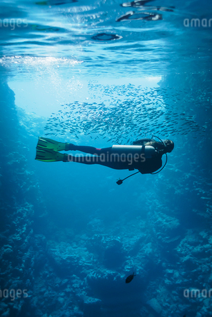 Young woman scuba diving underwater among school of fish, Vava'u, Tonga, Pacific Oceanの写真素材 [FYI02187348]